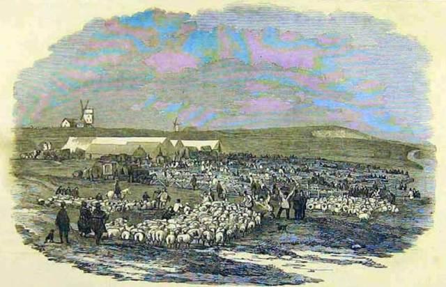 Lewes_Great_Sheep_Fair