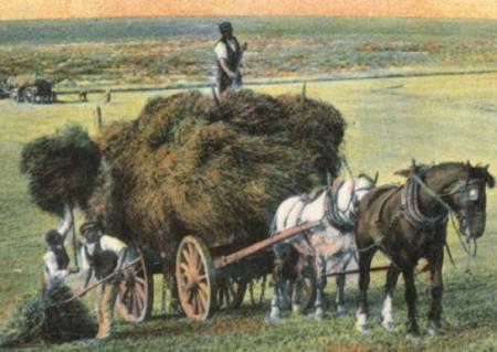 sussex haymaking