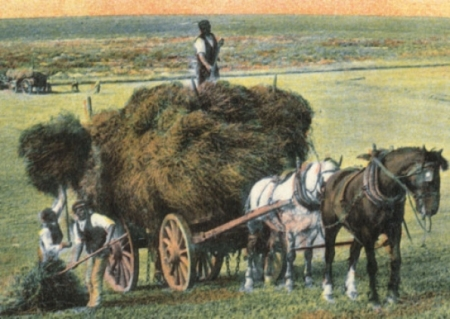 sussex haymaking