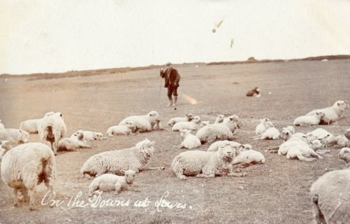Shepherd_and_Southdown_Sheep_Lewes_1907_postcard