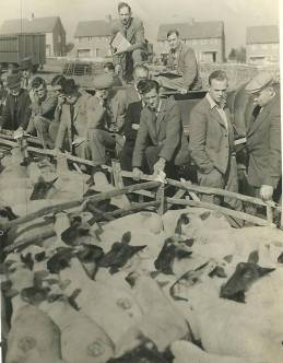 Lewes_sheep_market_1938_Les_Honess