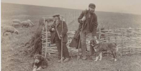 On_the_Downs_shepherds_Edwardian_postcard
