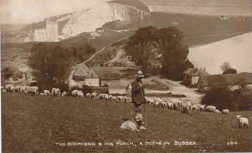 Shepherd_and_flock_Sussex_postcard