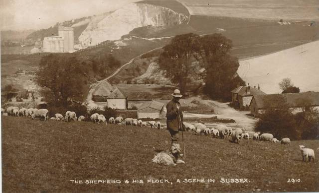 Shepherd_and_flock_Sussex_postcard