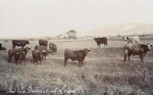 James Cheetham postcard, cattle and railway bridge over the Ouse near Lewes